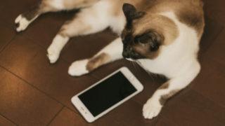 スマホと猫